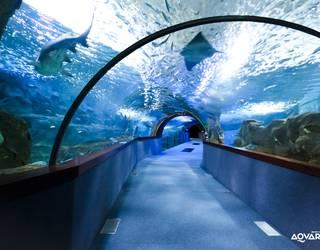 Aquariumerako sarrerak